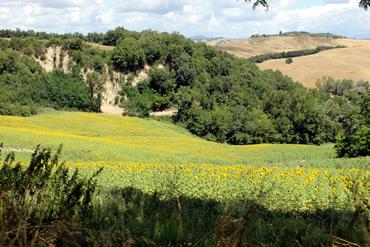 EstradaBuonconventoAsciano_Foto04