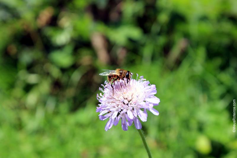 Flor com abelha