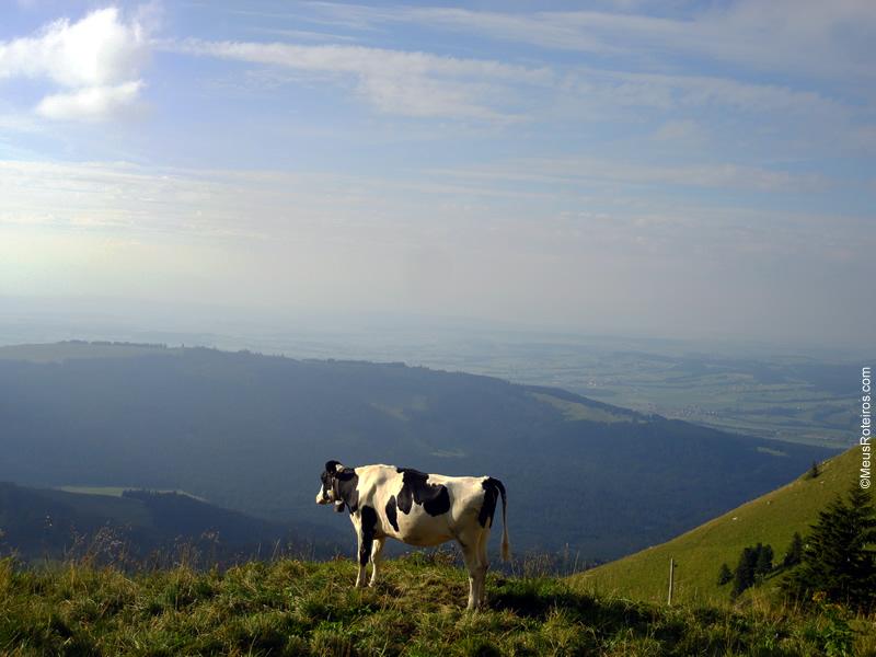 Vaca no alto da montanha