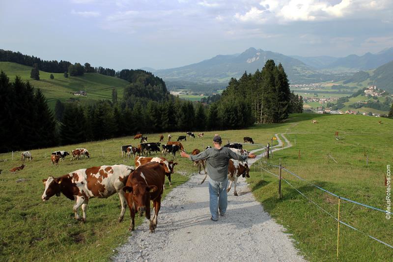 Vacas no meio da trilha do Sentier des fromageries