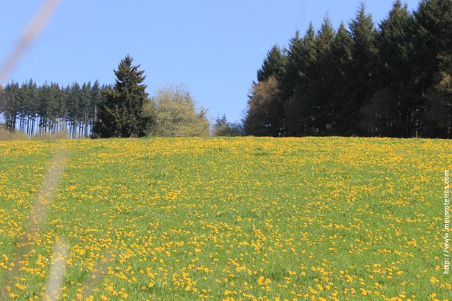 Parque Morvan, na França