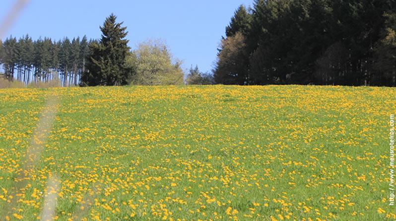 Parque Morvan: uma das reservas naturais mais antigas da França!