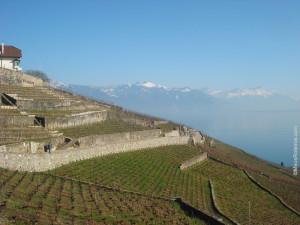Lavaux - Suíça / Switzerland