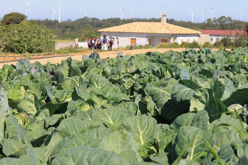 Trilha em Portugal: plantação de couve