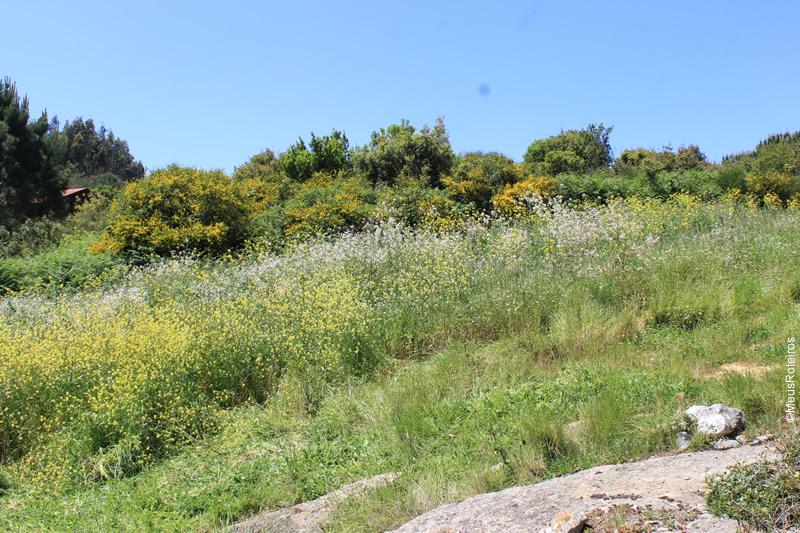 Trilha em Portugal: vegetação com flores
