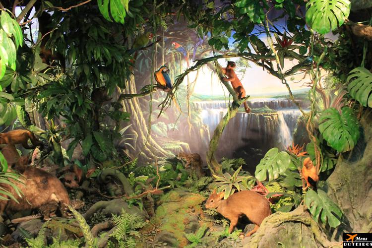 Museu de História Natural (Genebra) / Natural History Museum (Geneva)