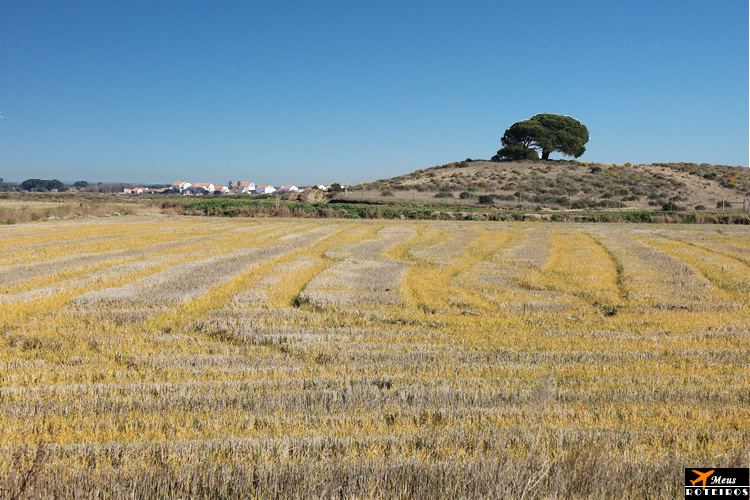 Natureza / Nature (Alentejo, Portugal)